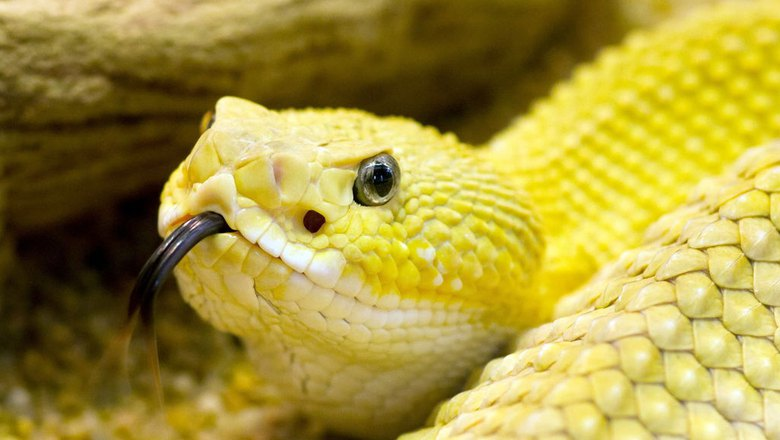 Pet Snakes Paradise Herps Exotic Reptile Pet Shows
